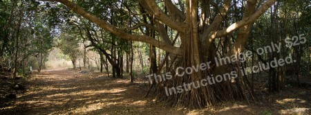 """Facebook Cover Image """"Forest Path"""""""